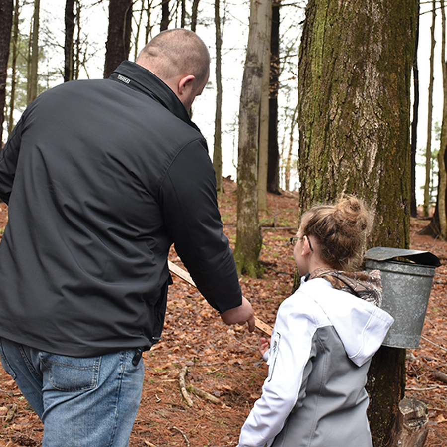 Sweet Reward: Cold, snowy winter promises to deliver a bumper crop of maple syrup