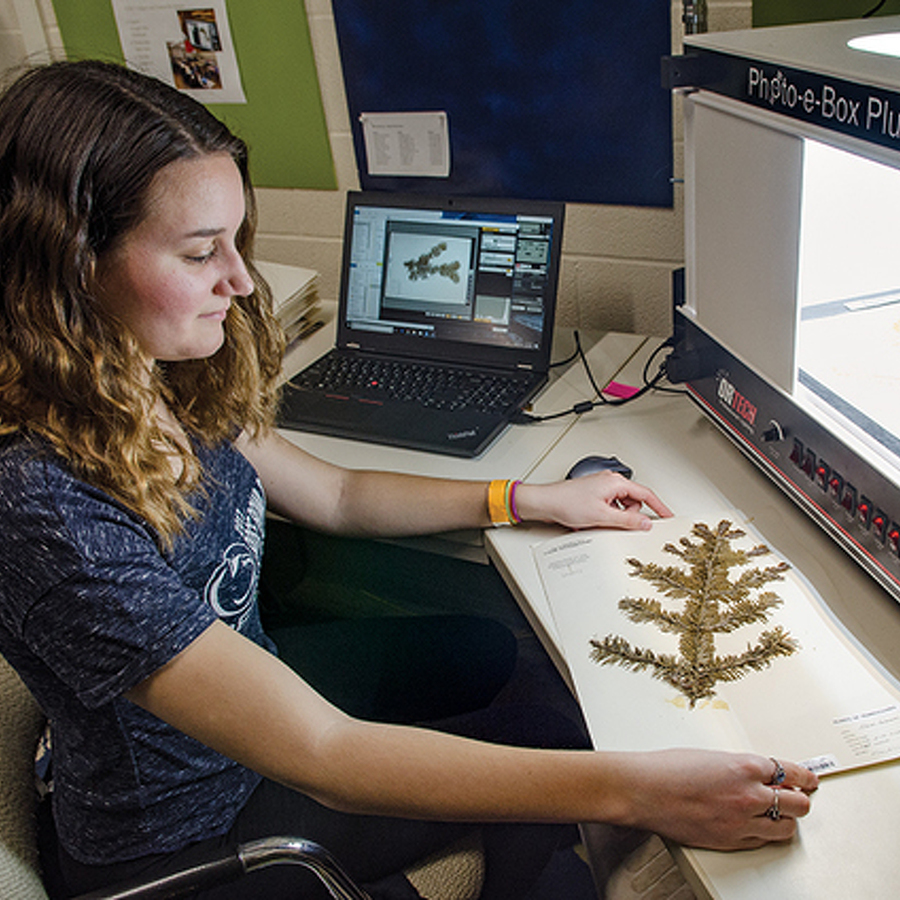 Preserving Seeds of Knowledge: Natural History Flourishes at Penn State's PAC Herbarium
