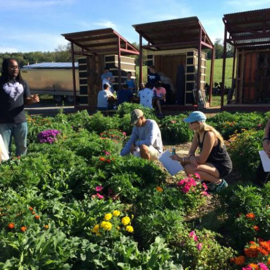 Penn State Student Farm, Sustainability Institute to Host Annual Harvest Festival