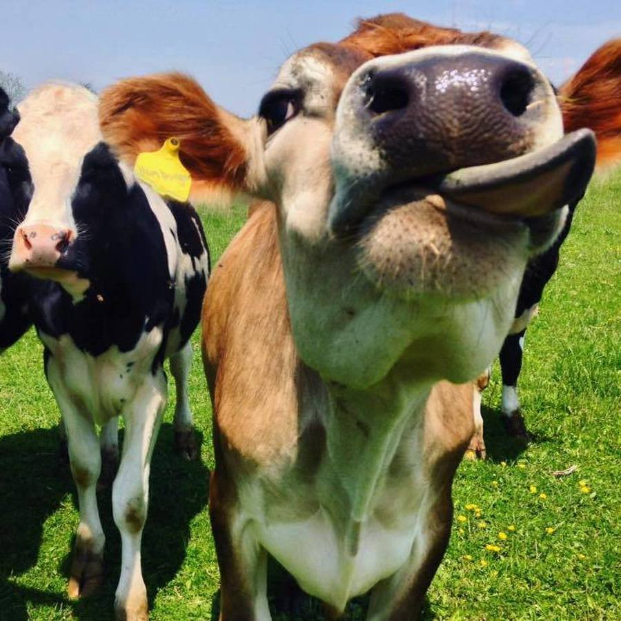 Centre County Farm Tour a Chance to Experience Area's Agriculture