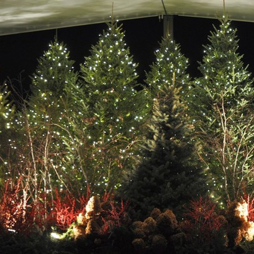 Arboretum to Host Winter Celebration
