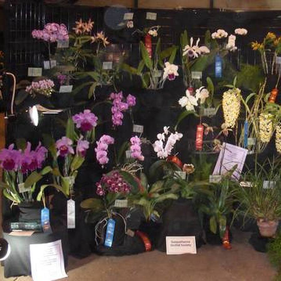 The Avid Gardener: Escape to the Orchid Show