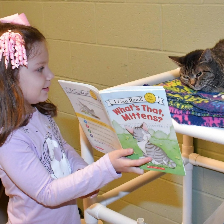 Cat Tales: Centre County PAWS Reading Program is a 'win-win' for youngsters and their feline shelter friends