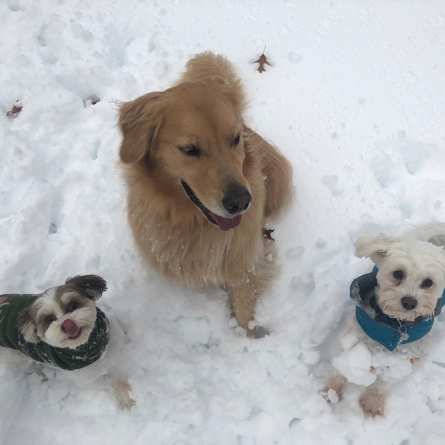 Keep Your Pet Safe with These Winter Pet Care Tips