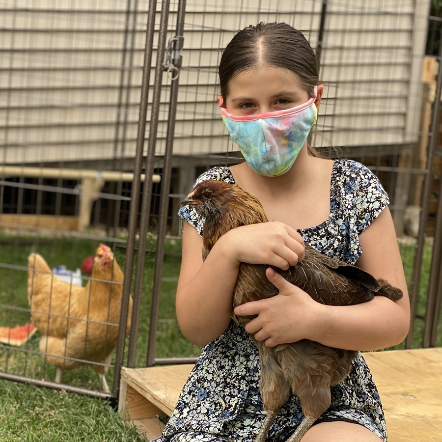 Chickens may be coming home to roost in College Twp.
