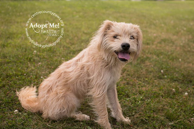 Adopt-A-Pet at Centre County PAWS