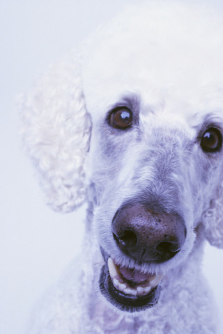 From Pit Bulls to Poodles (and Almost Everything in Between) It's Rarely All or Nothing