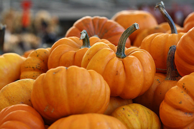 Stop and Smell the Pumpkins