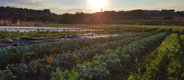 Penn State Student Farm to Host First Fall Harvest Festival
