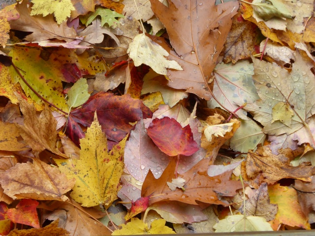 State College Extends Fall Leaf Collection