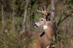 More opportunities on tap for hunters this year