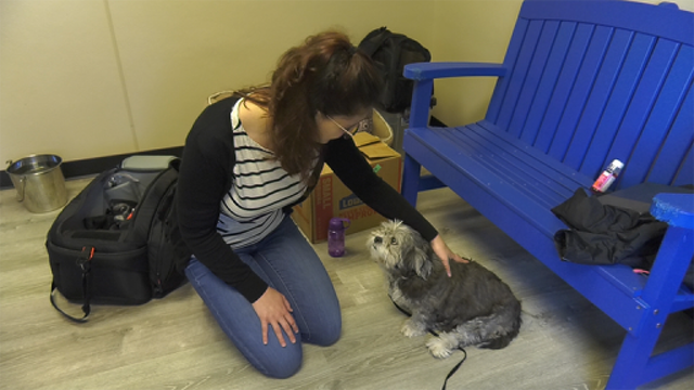 Local Volunteer Spends 35 Years Helping at PAWS