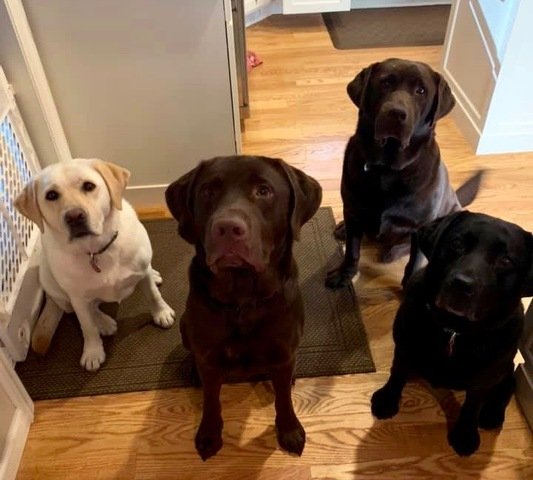 Making a Difference, One Labrador Retriever at a Time