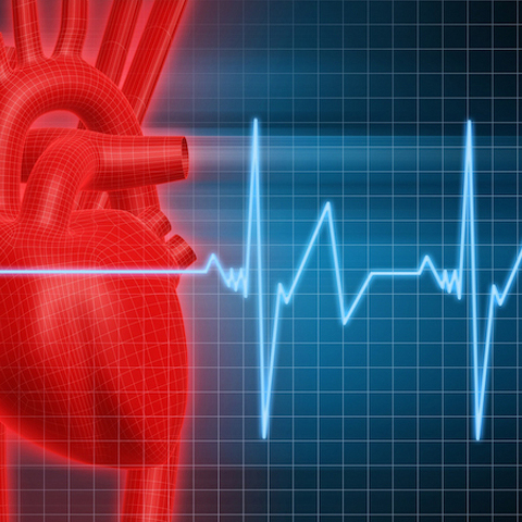 To Your Health: Protect Yourself From Coronary Artery Disease and Heart Attacks
