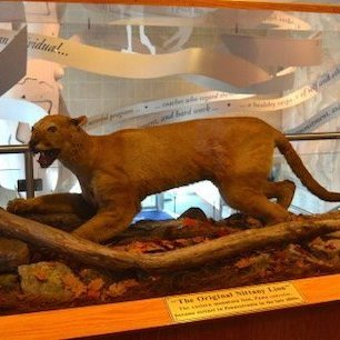 Student Researchers Sequencing Nittany Lion DNA Genomes