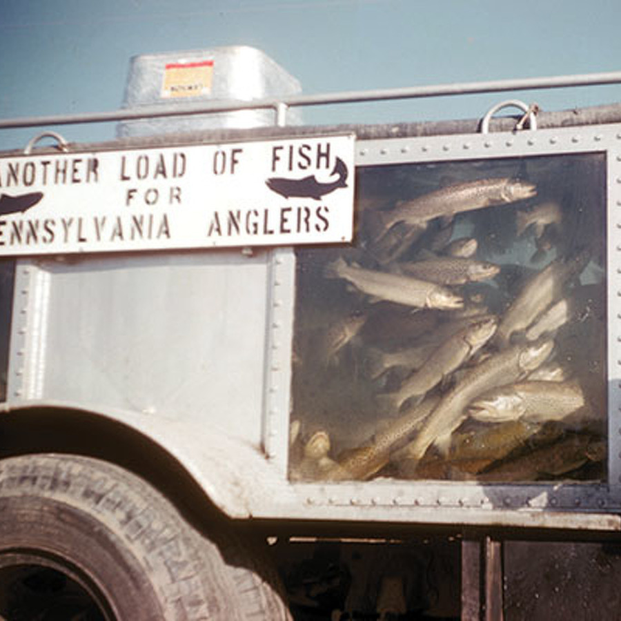 A Great and True Fish Story