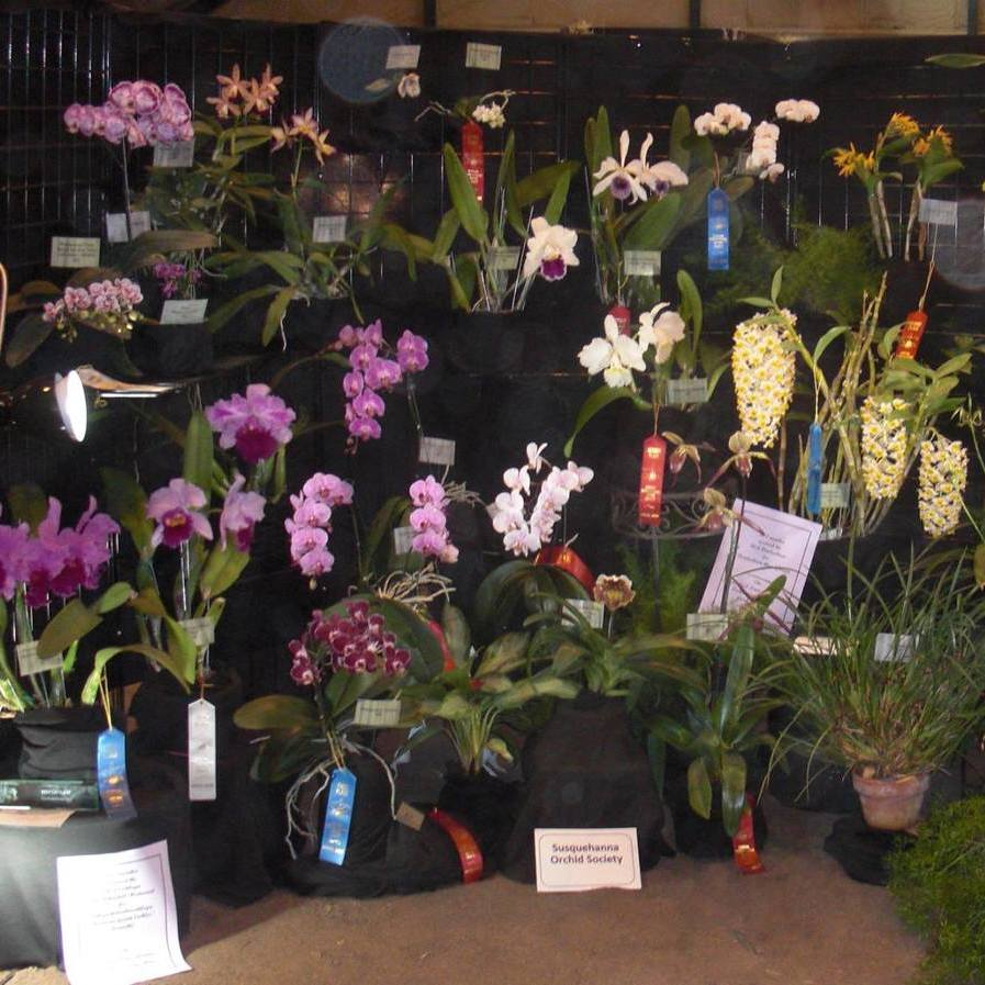 The Avid Gardner: Orchid Show a Premier Event for Growers and Collectors