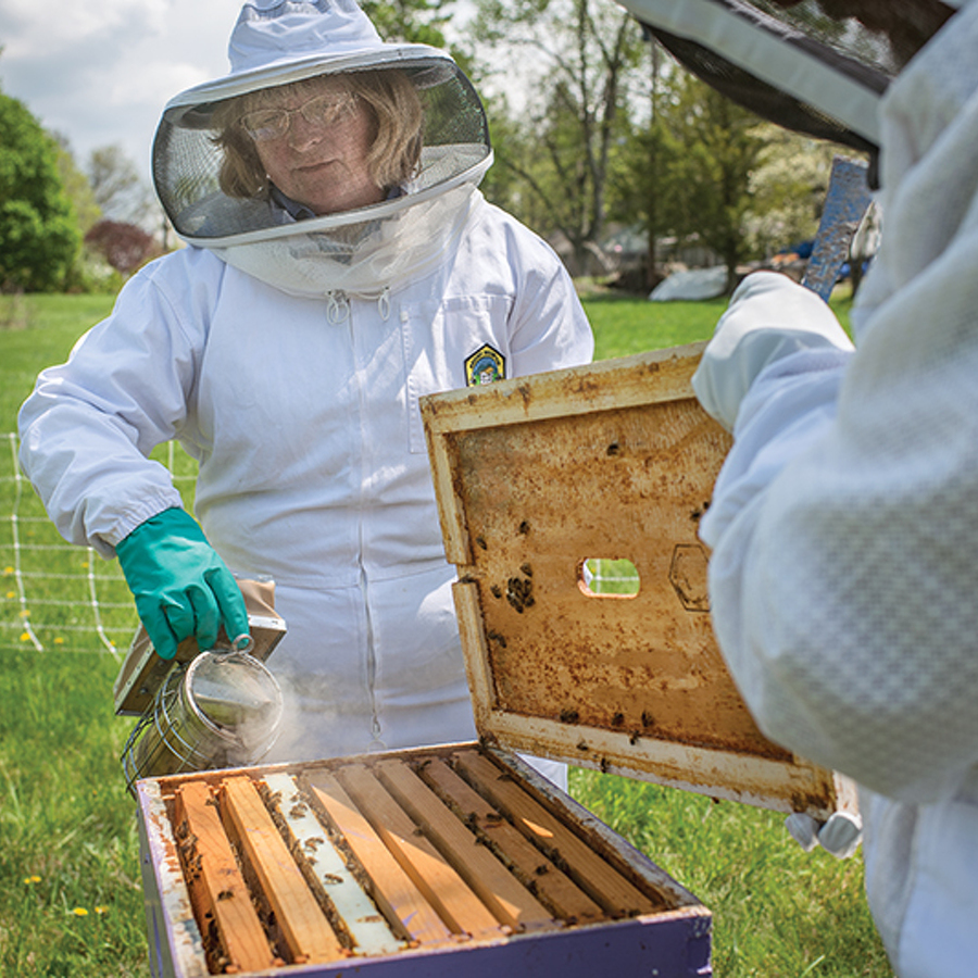 In the face of challenges, Centre County beekeepers work to help honeybees survive and thrive