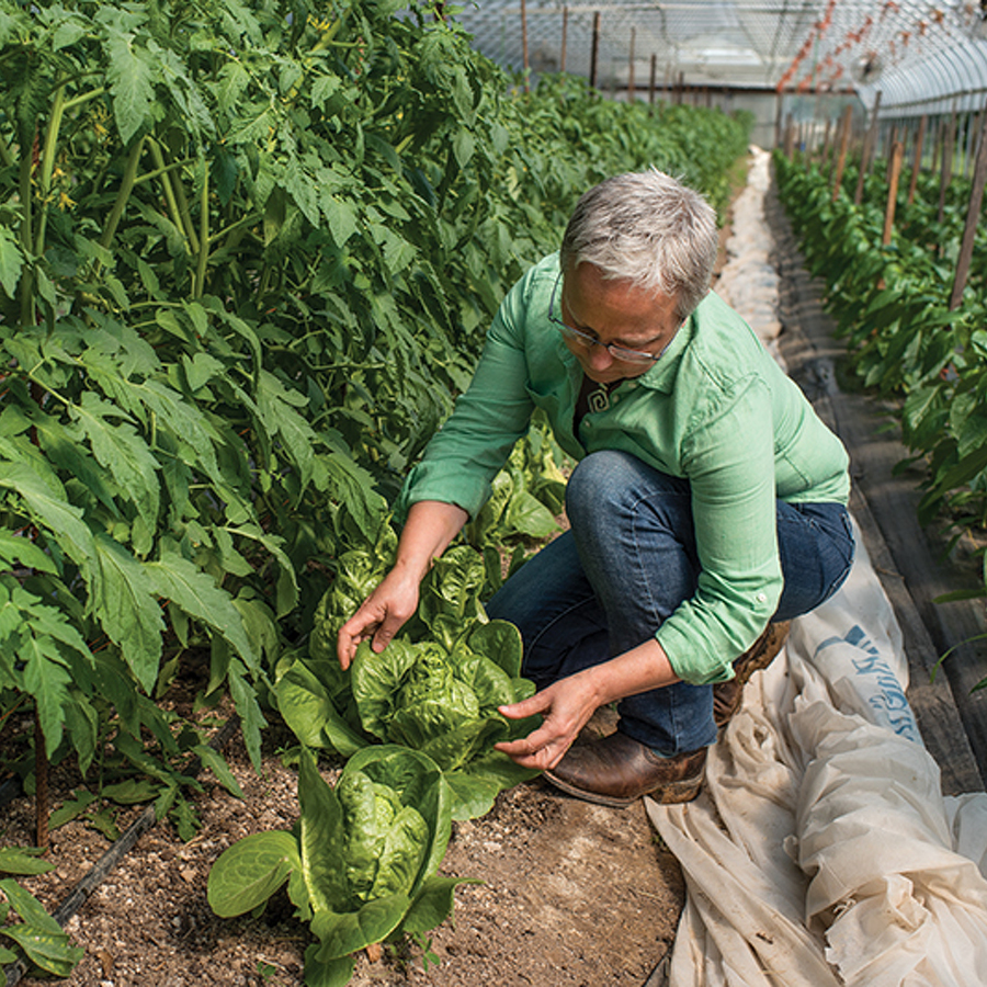 Growing Organically: Helping farmers is a passion at Pennsylvania Certified Organic