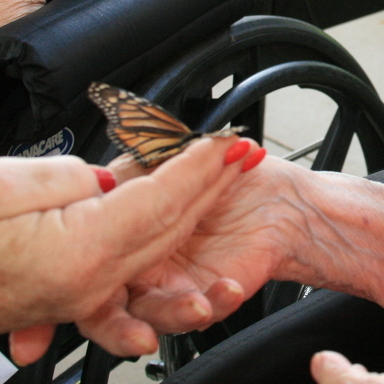 Centre Crest Residents Release Butterflies in Summer Tradition