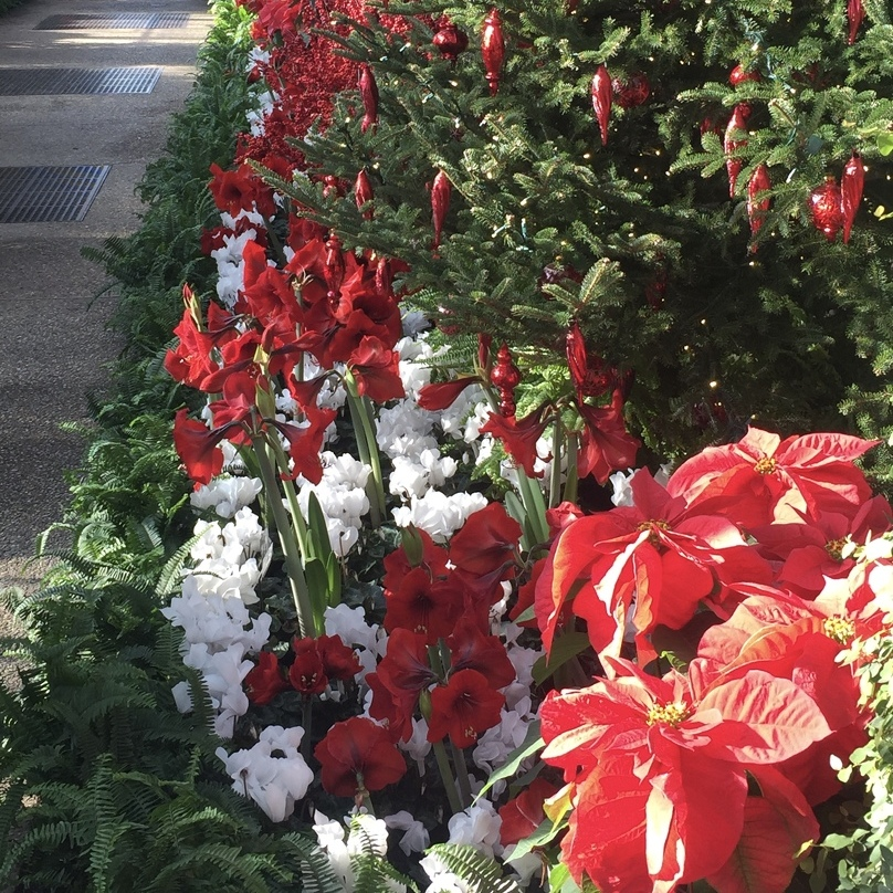 Avid Gardener: 5 Holiday Plants and Their Care