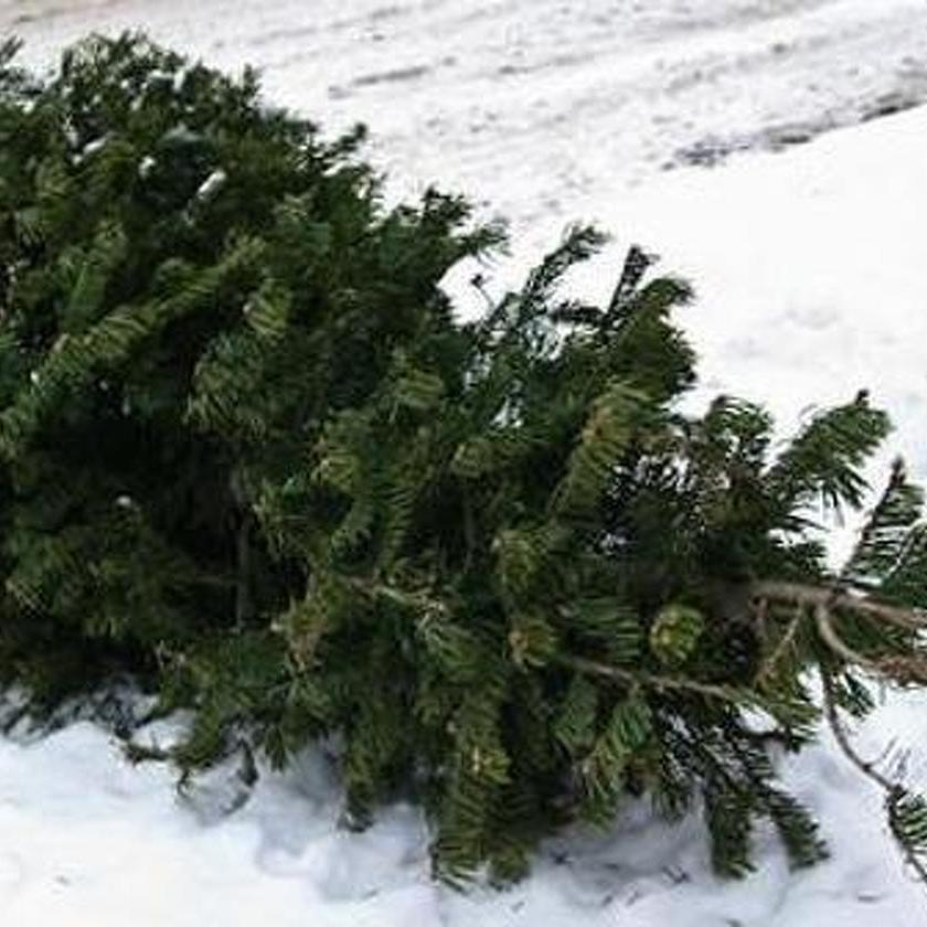 Christmas Tree Recycling Dates Set in Centre Region