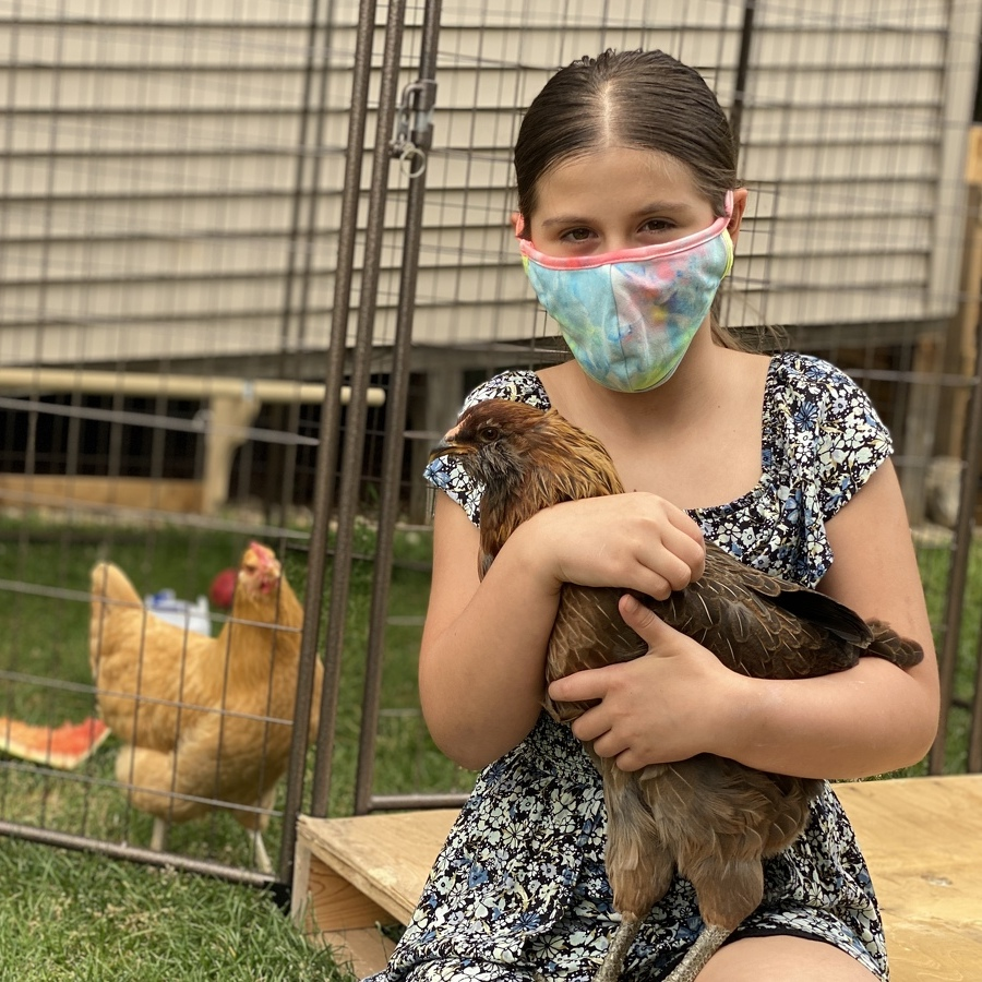 With Appeal Underway, College Township 10-Year-Old's Pet Chickens Can Stay for Now