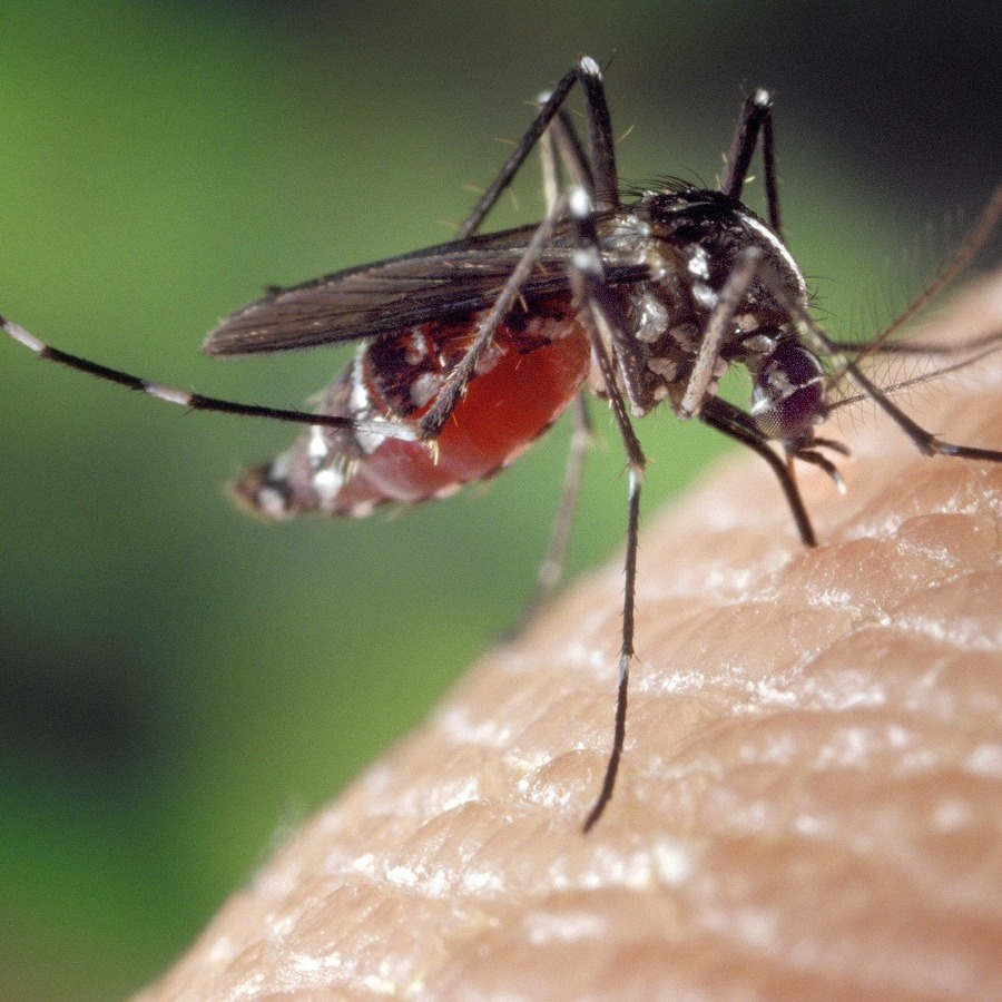 Mosquito Tests Positive for West Nile Virus in College Township