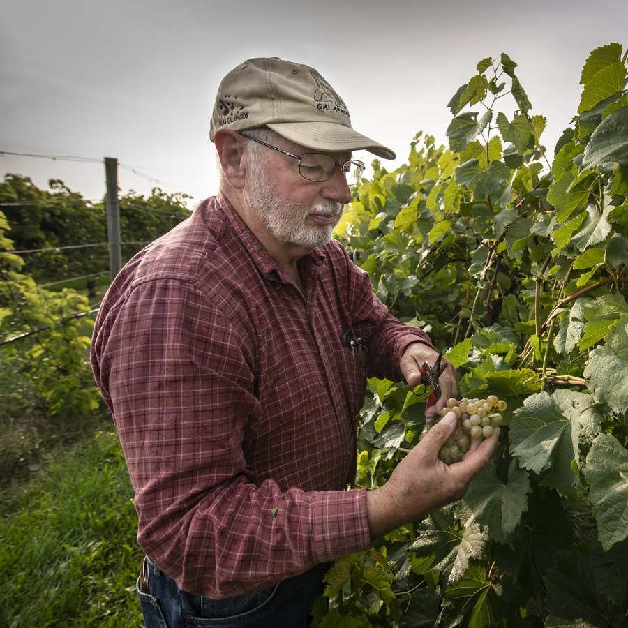 Fall's Bounty: Good grapes from a hot, dry summer, and bucolic settings are helping Centre County wineries offer a cozy escape